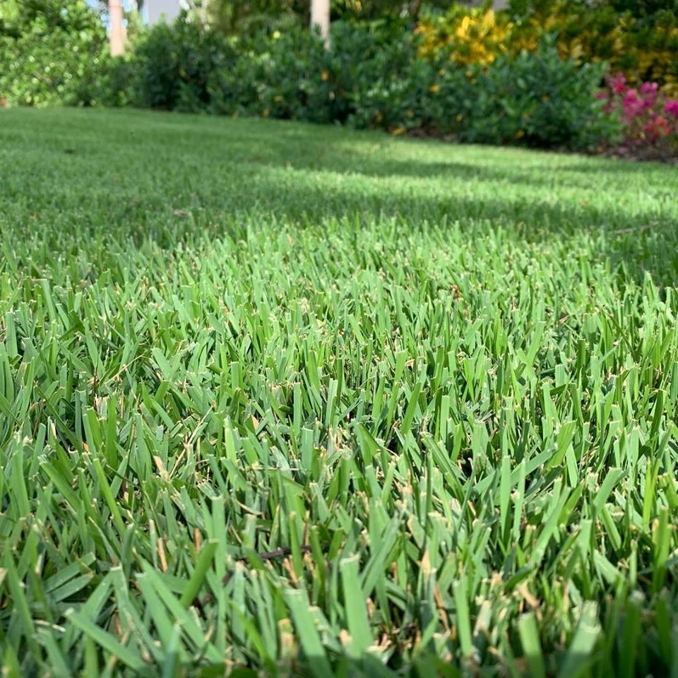 lawn service bonaire ga